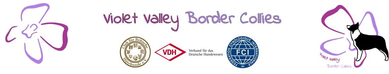 Violet Valley Border Collies