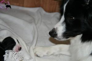 amy + puppie