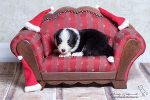 Charm sofa